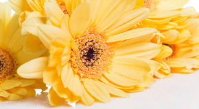 Yellow gerbera flower over the white background Royalty Free Stock Photos