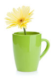 Yellow gerbera flower in tea cup Stock Photography