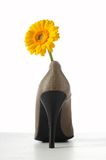 Yellow gerbera flower in womens shoe. On white background Royalty Free Stock Images