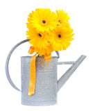 Yellow gerbera flowers Stock Photos