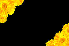 Yellow Gerbera framework Royalty Free Stock Photography