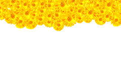 Yellow Gerbera framework. For show your idea royalty free illustration