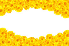 Yellow Gerbera framework. For show your idea stock illustration