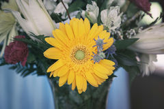 Yellow gerbera in vase