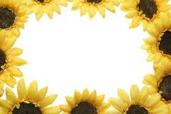 Yellow Gerberas Royalty Free Stock Photos