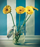 Yellow gerberas flowers in jar. On the blue wall with white strip Stock Photo