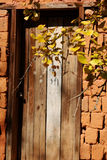 Yellow gingko. With wood door stock photo