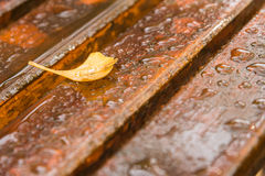 Yellow Ginkgo leave on wet wooden Royalty Free Stock Photos