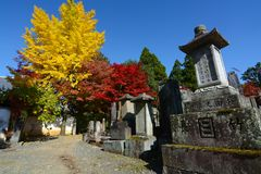 Yellow ginkgos and red maples add color to an old cemetery of tombstones engraved with family names in Kyoto. Yellow ginkgos and red maples add color to an Stock Image