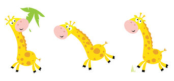 Yellow giraffe in 3 poses Stock Photos
