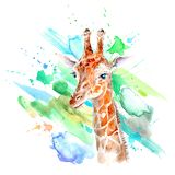 Yellow giraffe portrait and color blotch. Watercolor hand drawn illustration.White background.African animals illustration royalty free illustration
