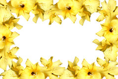 Yellow gladiolus Royalty Free Stock Images