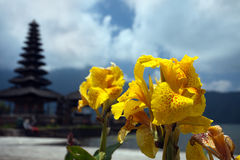 Yellow gladiolus on the background of Temple Ulun Danau. Bali Royalty Free Stock Images