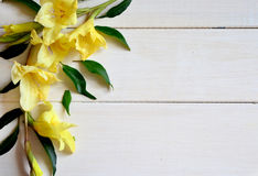 Yellow gladiolus and card with pencil on wooden background. Royalty Free Stock Images