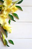 Yellow gladiolus and card with pencil on wooden background. Royalty Free Stock Image