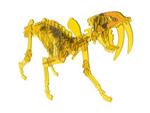 Yellow glass saber tooth skeleton. 3D rendered illustration of a yellow saber tooth skeleton. The object is  on a white background with no shadows Royalty Free Stock Photography
