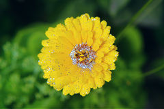 yellow glitter flower nature beautiful romantic Royalty Free Stock Image