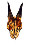 Yellow goat skull with horns (frontal). Hand Painted Watercolor Illustration Isolated: Yellow goat skull with horns Royalty Free Stock Photography