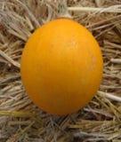 Yellow goblin egg Stock Photo