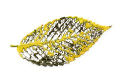 Yellow gold decayed fall elm leaf vein structure Stock Image