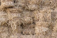 Yellow golden bales of wheat hay straw stacked in a heap in stubble field on a summer stock image