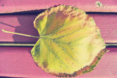 Yellow, golden leaf on the pink bench, shot from above. Vintage style. Stock Photos