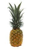 Yellow Golden Pineapple Stock Image