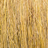 Yellow golden straw bale showing texture and looses straws Stock Images