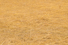 Yellow golden straw bale showing texture and looses straws Stock Image