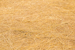 Yellow golden straw bale showing texture and looses straws Royalty Free Stock Photography