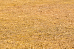 yellow golden straw bale showing texture and looses straws Royalty Free Stock Image