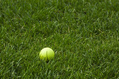 Yellow golf ball in the grass Royalty Free Stock Photos