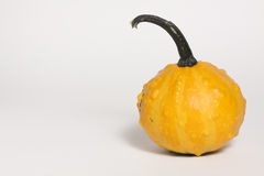 Yellow Gourd Stock Images