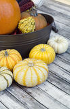 Yellow Gourde and orange pumpkins for thanksgiving Royalty Free Stock Photos