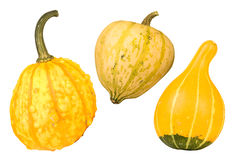Yellow gourds Stock Photography