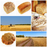 Yellow grain field and bread collage. Collage with yellow grain field and bread Stock Image