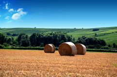 Yellow grain harvested on a fa Royalty Free Stock Photos