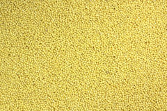 Yellow grain millet Royalty Free Stock Image