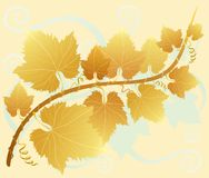 Yellow grape leaves Royalty Free Stock Images