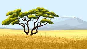 Yellow grass and African acacia. Stock Photos