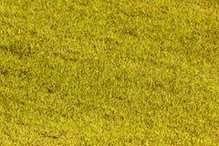 Yellow grass Stock Photography