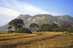 Yellow grass  on a background of mountains. Yellow grass steppe on a background of mountains Stock Images