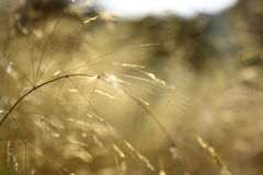 Yellow grass for background Stock Image