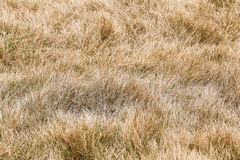 Yellow  grass Royalty Free Stock Photography