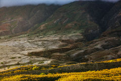 Yellow Grass Field Beside Mountain Covered With Fog Royalty Free Stock Image