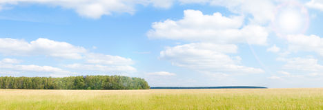 Yellow grass field near forest edge. Stock Photography