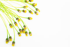 Yellow grass flowers isolated on white background Royalty Free Stock Photography