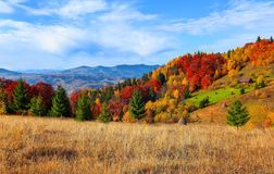 On the yellow grass lawn there are green lush fair trees with the background of autumn mountains. Stock Image
