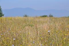 Yellow Grass. Nice Nature Scene Stock Images