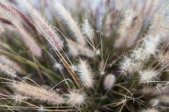Yellow Grass pasture herb herbage herby. Photograph of a yellow grass herbage Stock Image